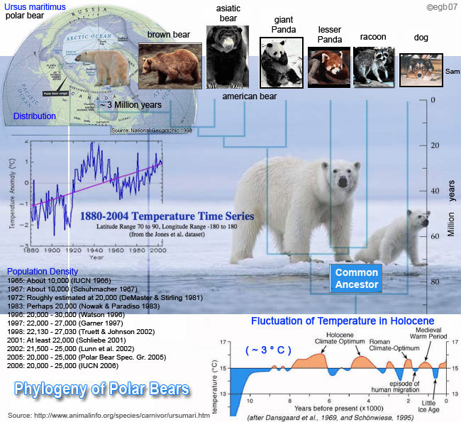 Animal Info - Polar Bear 
