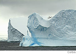 Large icebergs in the Weddell Sea, Antarctica. Winter sea ice 